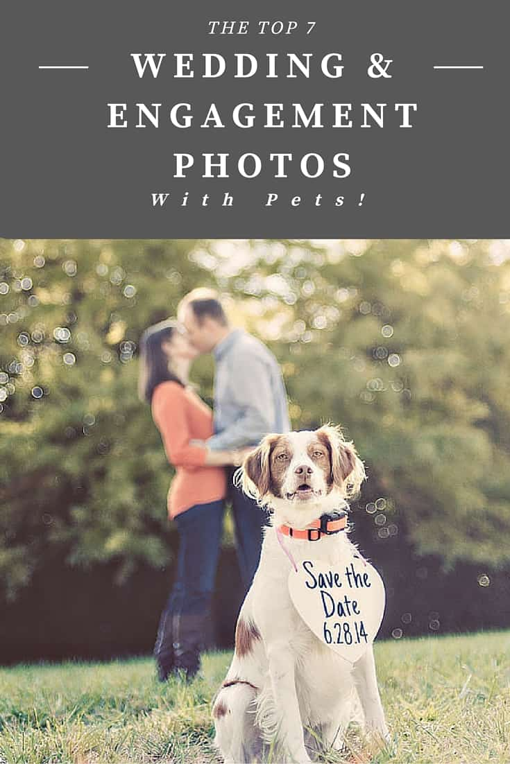 wedding and engagement photos with pets!