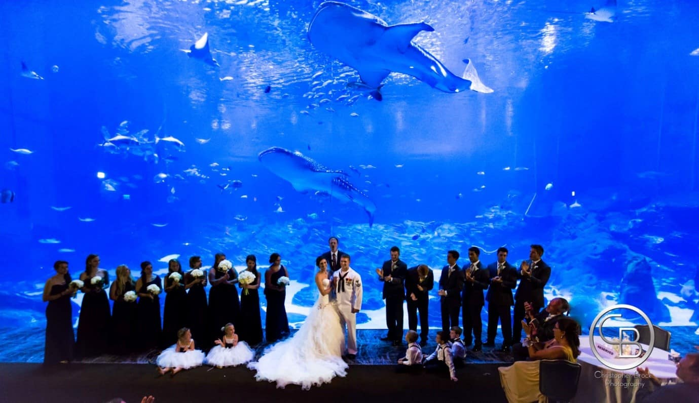 chris brock aquarium wedding