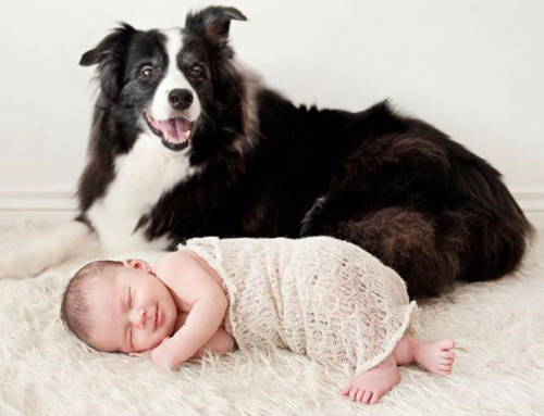 Tips and Ideas for Baby and Fur Baby Photos